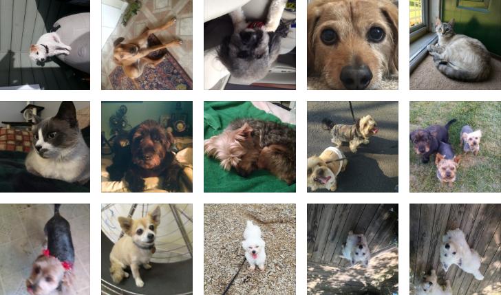 dogma-members