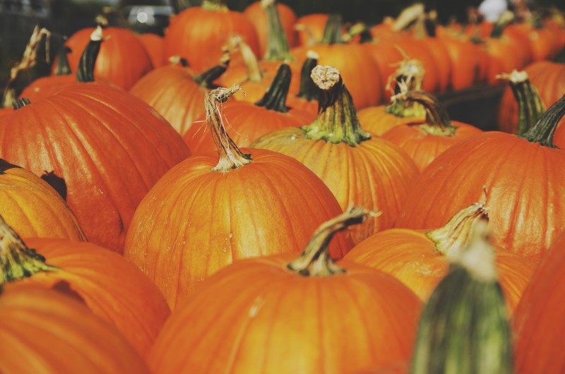 Pumpkin helps in regular digestion, diarrhea and UTI