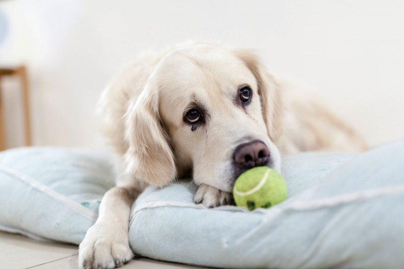 Dog toys to keep them healthy